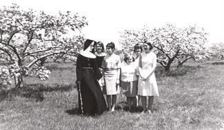 Apple Trees 1966